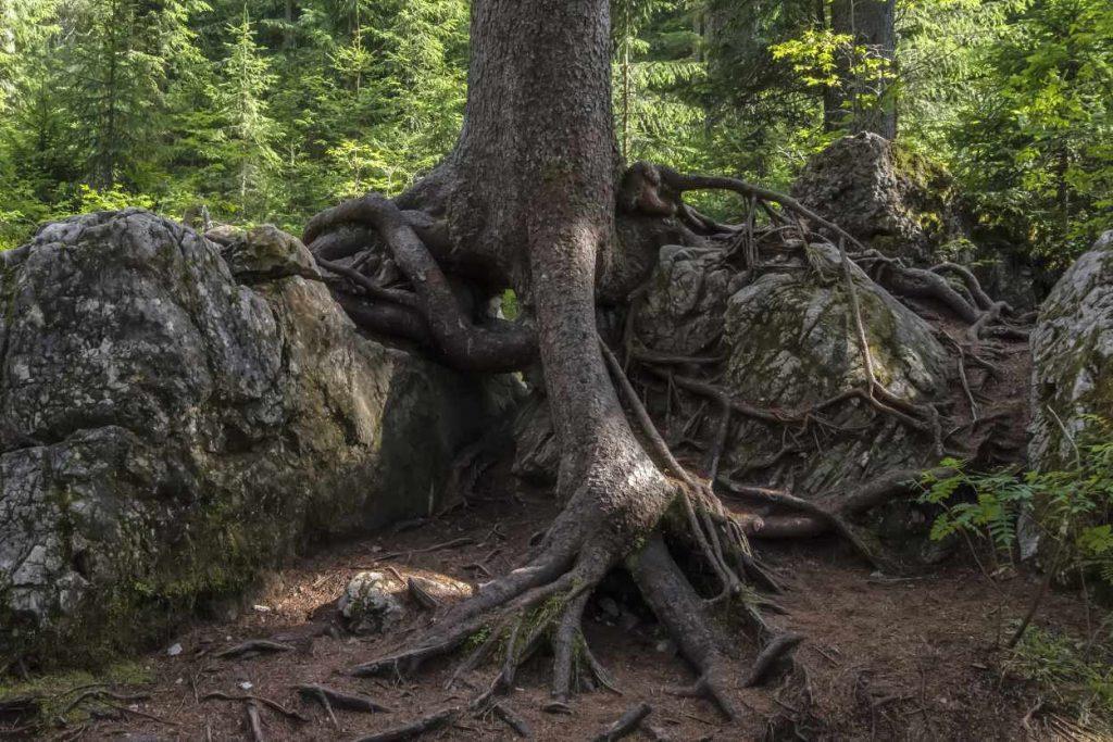 arbre tai chi